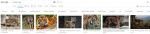 Ergebnis der Google Bildersuche zu Sumatra Tiger, der WWF ist ganz vorne mit dabei