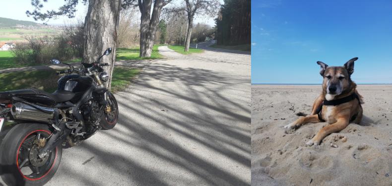 Ein Motorrad vor schöner Aussicht und ein Hund am Strand