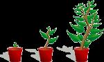 Fundraising mit Blog verspricht höheres Spendenvolumen_FundraisingBox