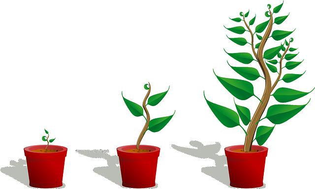 Grafik einer wachsenden Pflanze